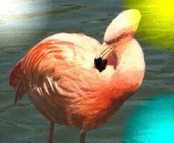 Id4furamingo3
