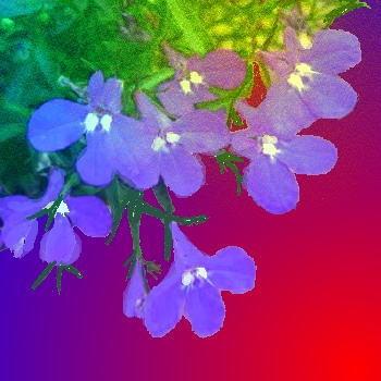 Photo_20200505180401